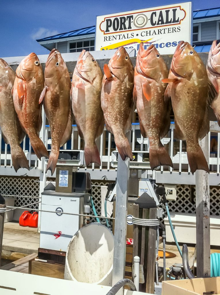 Fish caught on Naples Deep Sea Fishing Charter
